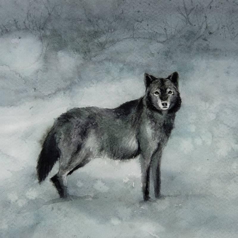Detalle Obra Canis lupus - Serie Colorzoo - Artista Antonio Morales Prats