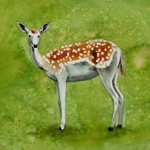 Detalle Obra Cervus elaphus - Serie Colorzoo - Artista Antonio Morales Prats