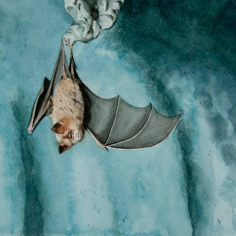 Detalle Obra Pipistrellus pipistrellus - Serie Colorzoo - Artista Antonio Morales Prats