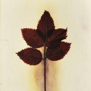 Detalle Obra Planta 4 - Pintura - Serie Natura - Artista pintor Antonio Morales Prats