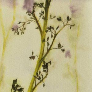 Detalle Obra Planta - Pintura - Serie Natura - Artista pintor Antonio Morales Prats