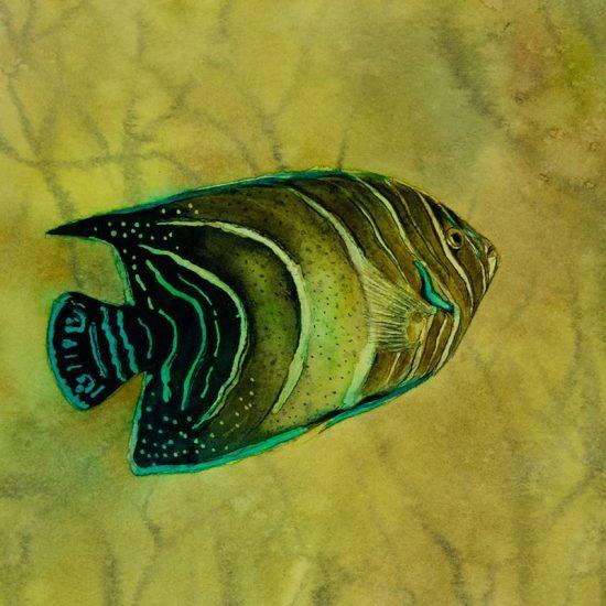 Detalle Obra Pomacanthus striatus - Serie Colorzoo - Artista Antonio Morales Prats