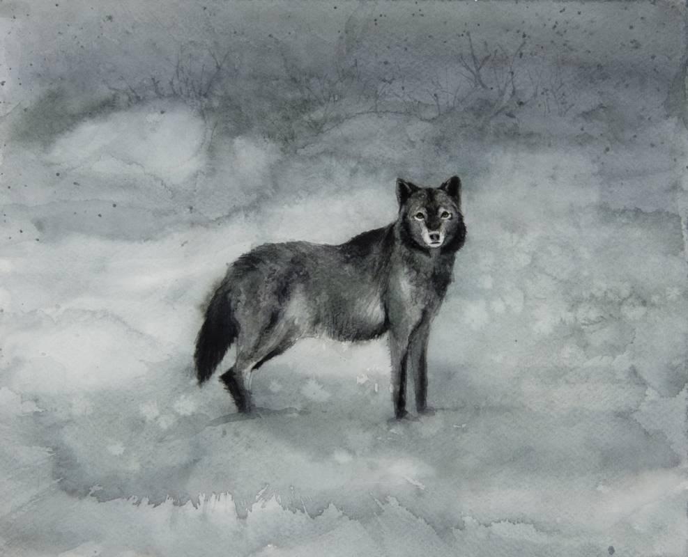 Obra Canis lupus - Serie Colorzoo - Artista Antonio Morales Prats