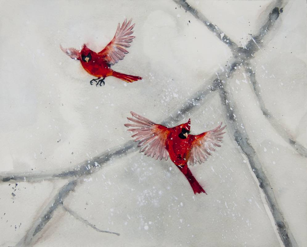 Obra Cardinalis cardinalis - Serie Colorzoo - Artista Antonio Morales Prats