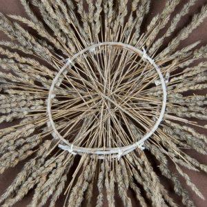 Obra Cyclus II - Artista Antonio Morales Prats - Proyecto Kryptos Natura > Plantae