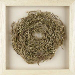 Obra Cyclus IV - Artista Antonio Morales Prats - Proyecto Kryptos Natura > Plantae