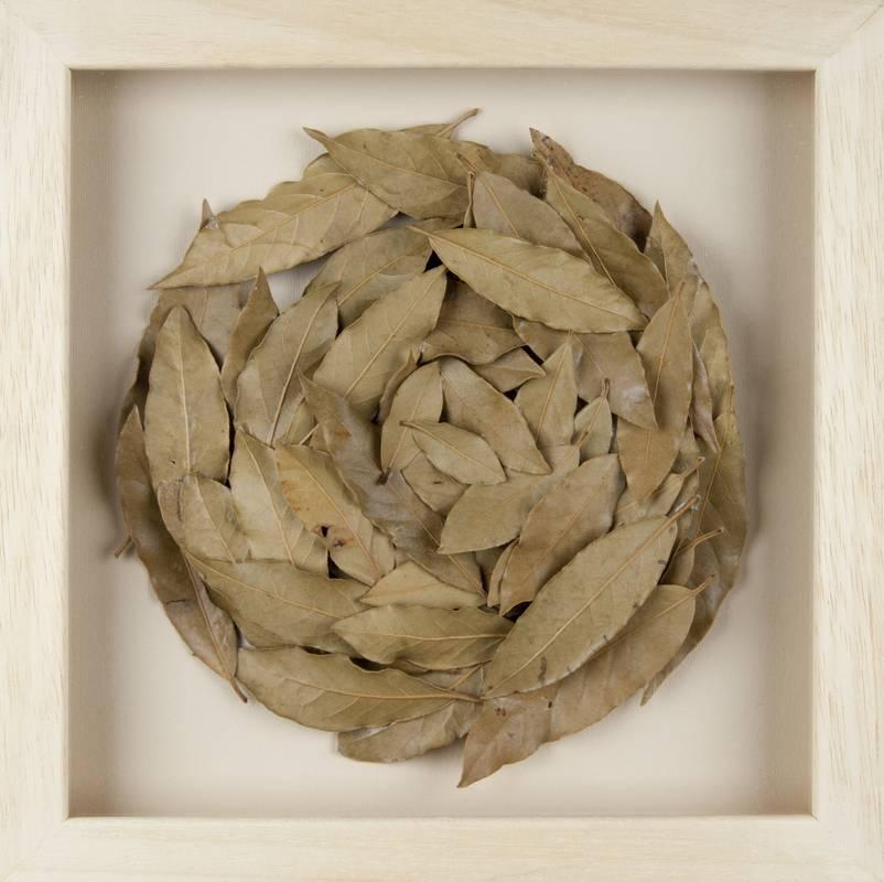 Obra Cyclus V - Artista Antonio Morales Prats - Proyecto Kryptos Natura > Plantae