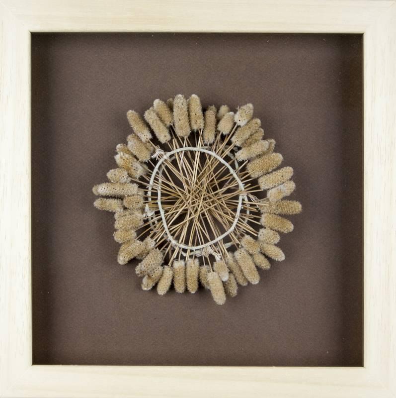 Obra Cyclus VI - Artista Antonio Morales Prats - Proyecto Kryptos Natura > Plantae