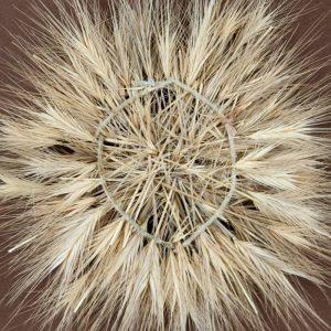 Obra Cyclus VII - Artista Antonio Morales Prats - Proyecto Kryptos Natura > Plantae