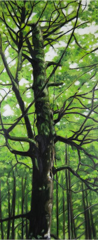 Obra Fagus Sylvatica I – Pintura – Serie Natura – Artista pintor Antonio Morales Prats