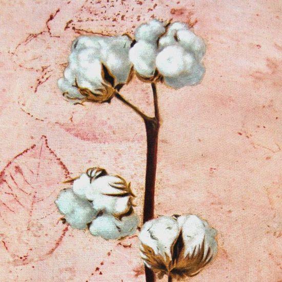 Obra Gossypium hisutum - Pintura - Pintor Antonio Morales Prats - Proyecto Kryptos Natura Stationalis