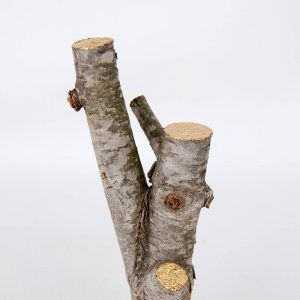 Obra Kintsugi I - Escultura - Proyecto Kryptos Natura Plantae - Artista Antonio Morales Prats