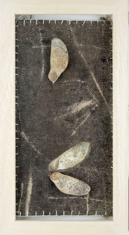 Obra Muestra I - Artista Antonio Morales Prats - Proyecto Kryptos Natura > Plantae