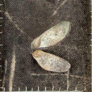 Obra Muestra I Proyecto Kryptos Natura Plantae Artista Antonio Morales Prats