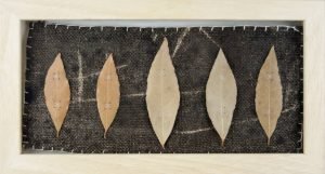 Obra Muestra II - Artista Antonio Morales Prats - Proyecto Kryptos Natura > Plantae