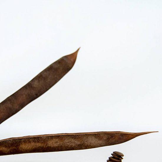 Obra Naturaleza I - Escultura - Proyecto Kryptos Natura Plantae - Artista Antonio Morales Prats