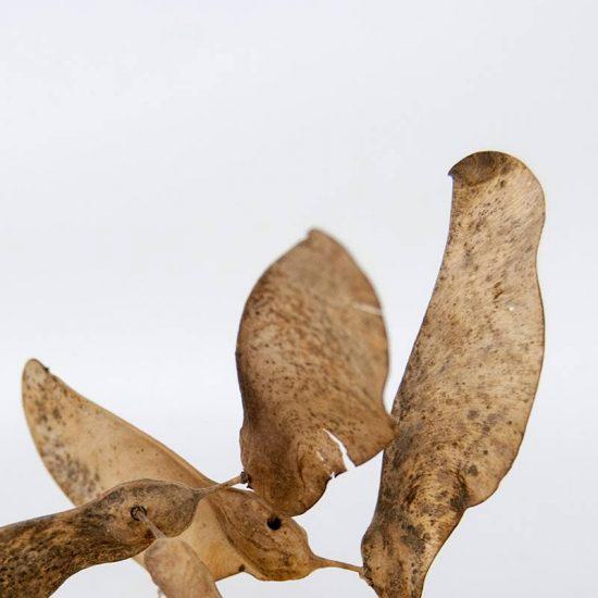Obra Naturaleza VII - Escultura - Proyecto Kryptos Natura Plantae - Artista Antonio Morales Prats