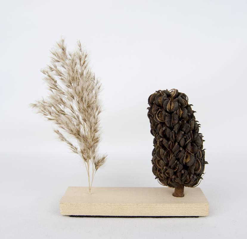 Obra Naturaleza X - Escultura - Proyecto Kryptos Natura Plantae - Artista Antonio Morales Prats