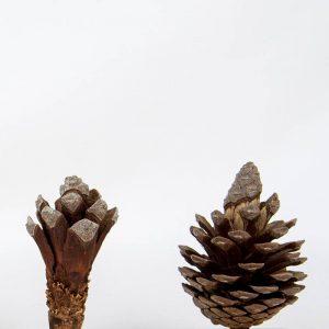 Obra Naturaleza XI - Escultura - Proyecto Kryptos Natura Plantae - Artista Antonio Morales Prats