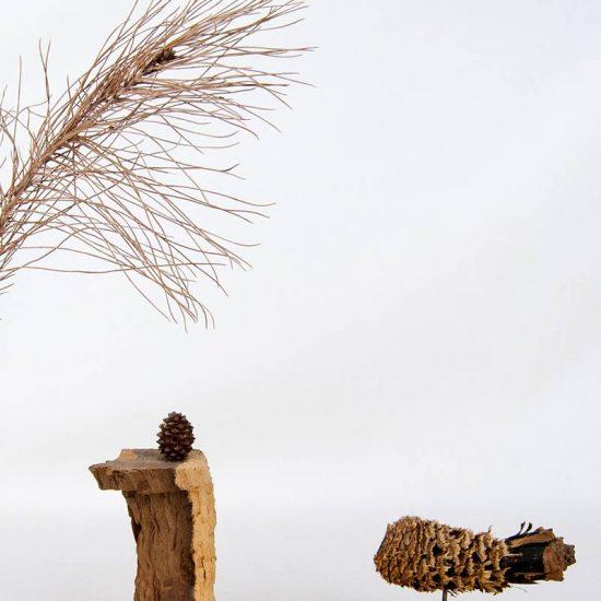 Obra Naturaleza XII - Escultura - Proyecto Kryptos Natura Plantae - Artista Antonio Morales Prats