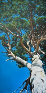 Obra Pino centenario - Pintura - Serie Natura - Artista pintor Antonio Morales Prats