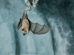 Obra Pipistrellus pipistrellus - Serie Colorzoo - Artista Antonio Morales Prats