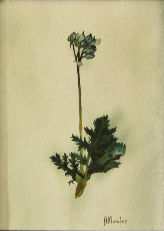Obra Planta 3 - Pintura - Serie Natura - Artista pintor Antonio Morales Prats