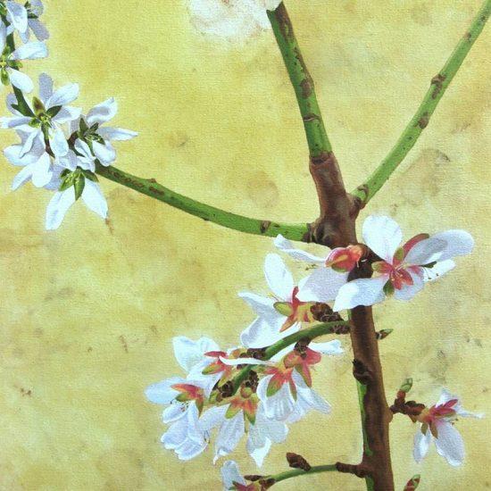Obra Prunus dulcis - Pintura - Pintor Antonio Morales Prats - Proyecto Kryptos Natura Stationalis